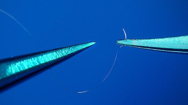 Ferri- per Supermicrochirurgia pinza